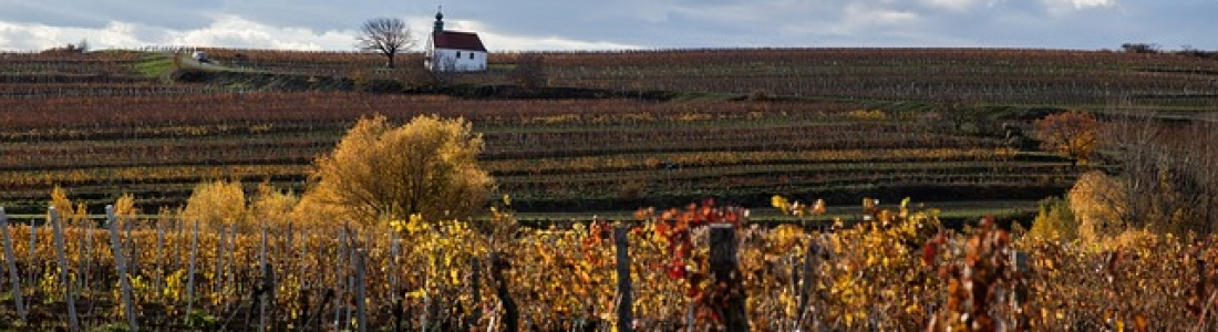 Hunter Valley Wineries and Blue Mountain Tours
